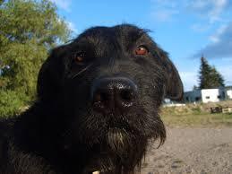 Egyszerűen elérhető kutyaeledel webshop