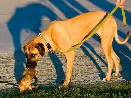 Az óriási kutyakölyköknek Happy Dog Maxi baby kutyatáp