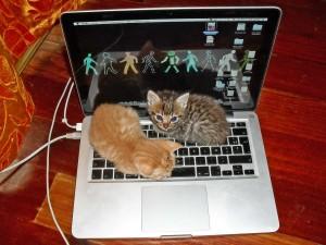 Laptopp akkuk