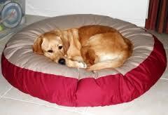 Kutyafekhely, amit könnyen szárazon tarthatsz