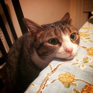 A macska játékok lenyűgözik a szőrmókokat
