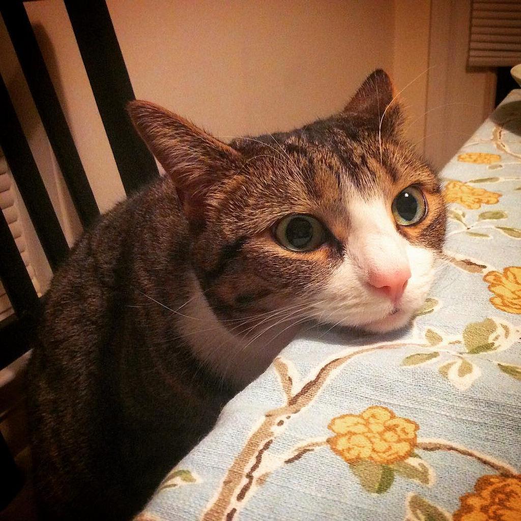 A macska játékok örömet szereznek a szőrmókoknak
