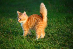 Állat Webshop